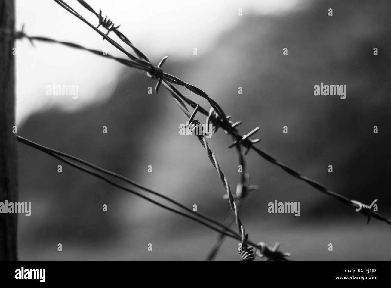 Close up of barbed wire with out of focus background in black and white - Stock Image