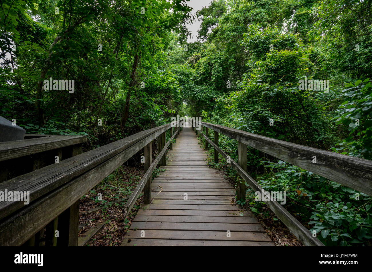 Boardwalk trail on Currituck Banks North Carolina National Estuarine Research Reserve Stock Photo