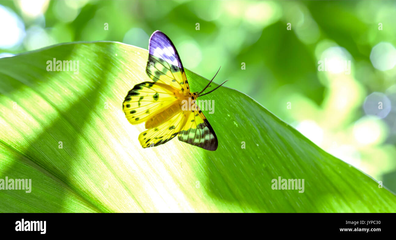 Butterfly Forest Magnetic Island