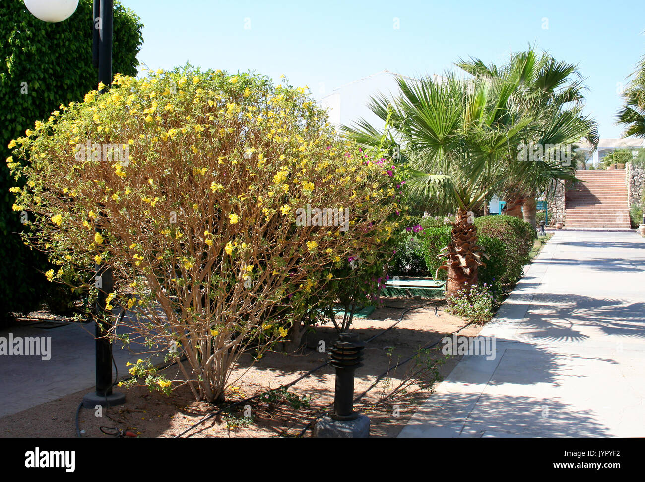 Path and palm trees in the territory of hotel - Stock Image