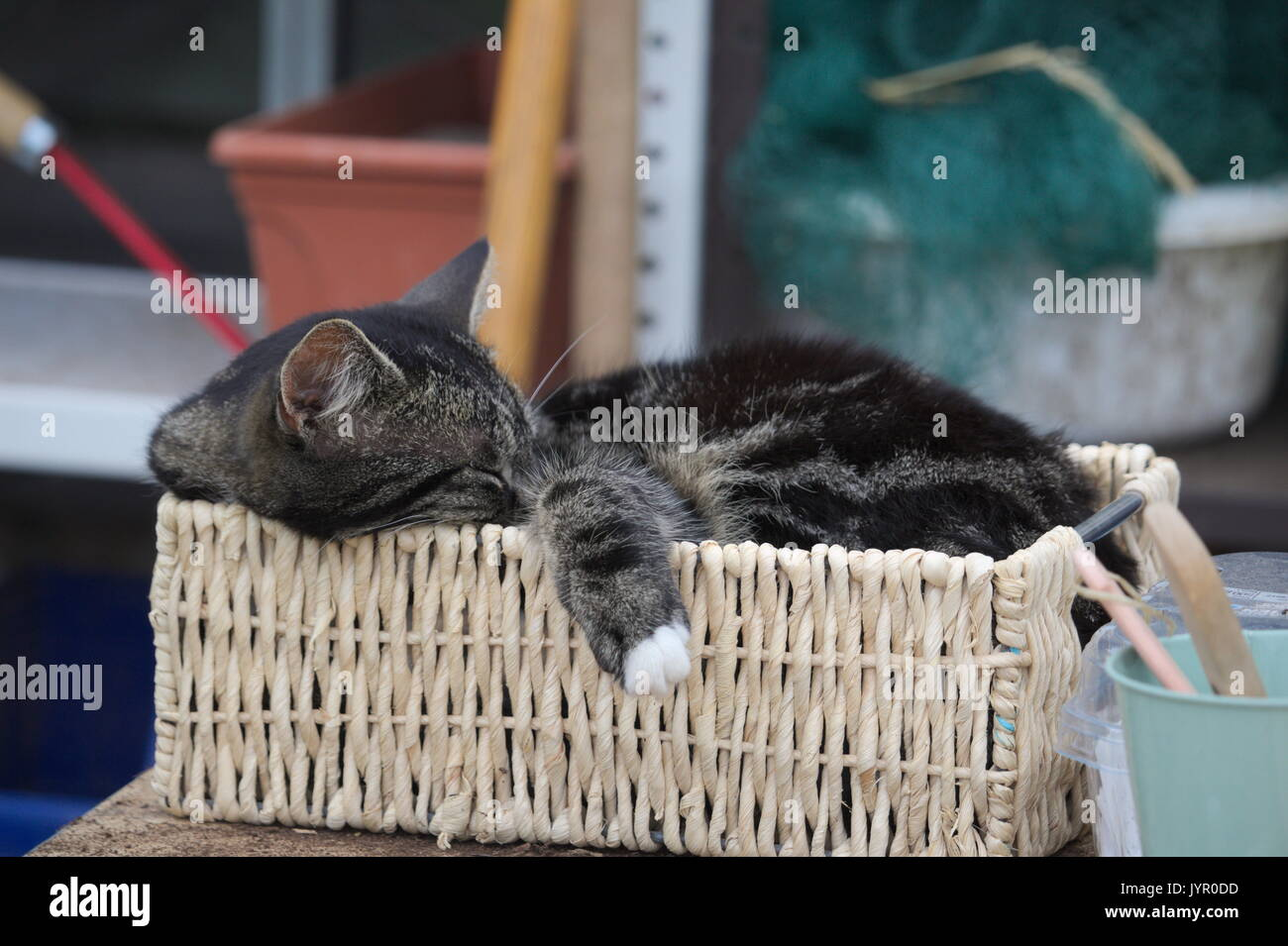 Lazy cat sleeping in a cramped basket - Stock Image