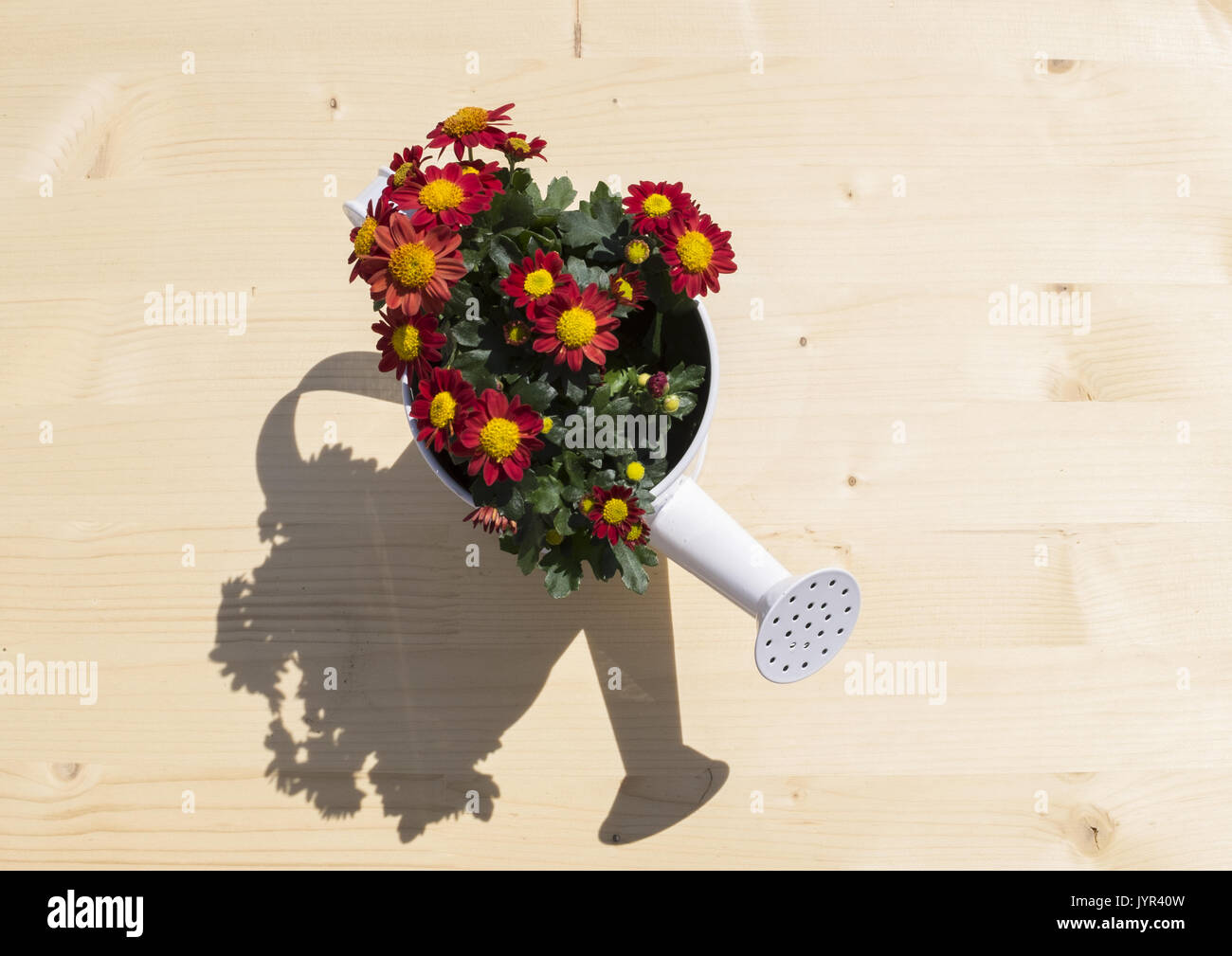 nice ewer with flowers and shadow Stock Photo