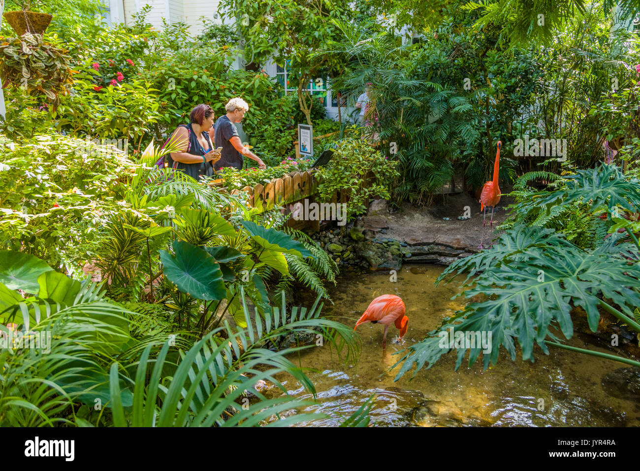 The Key West Butterfly and Nature Conservatory - Stock Image