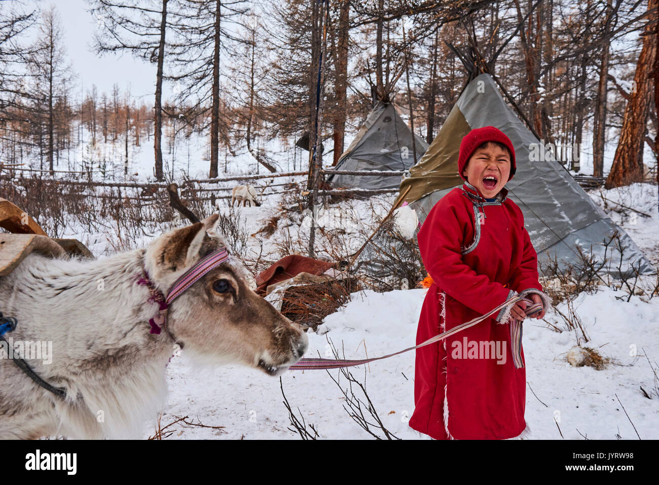 Mongolia, Khovsgol province, the Tsaatan, reindeer herder, the winter camp, young boy crying to call his reindeers - Stock Image