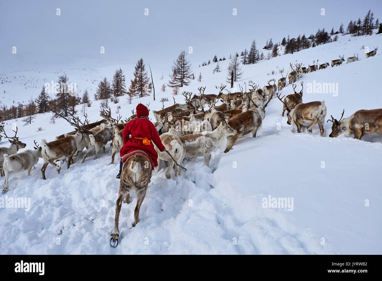 Mongolia, Khovsgol privince, the Tsaatan, reindeer herder, winter migration, transhumance - Stock Image
