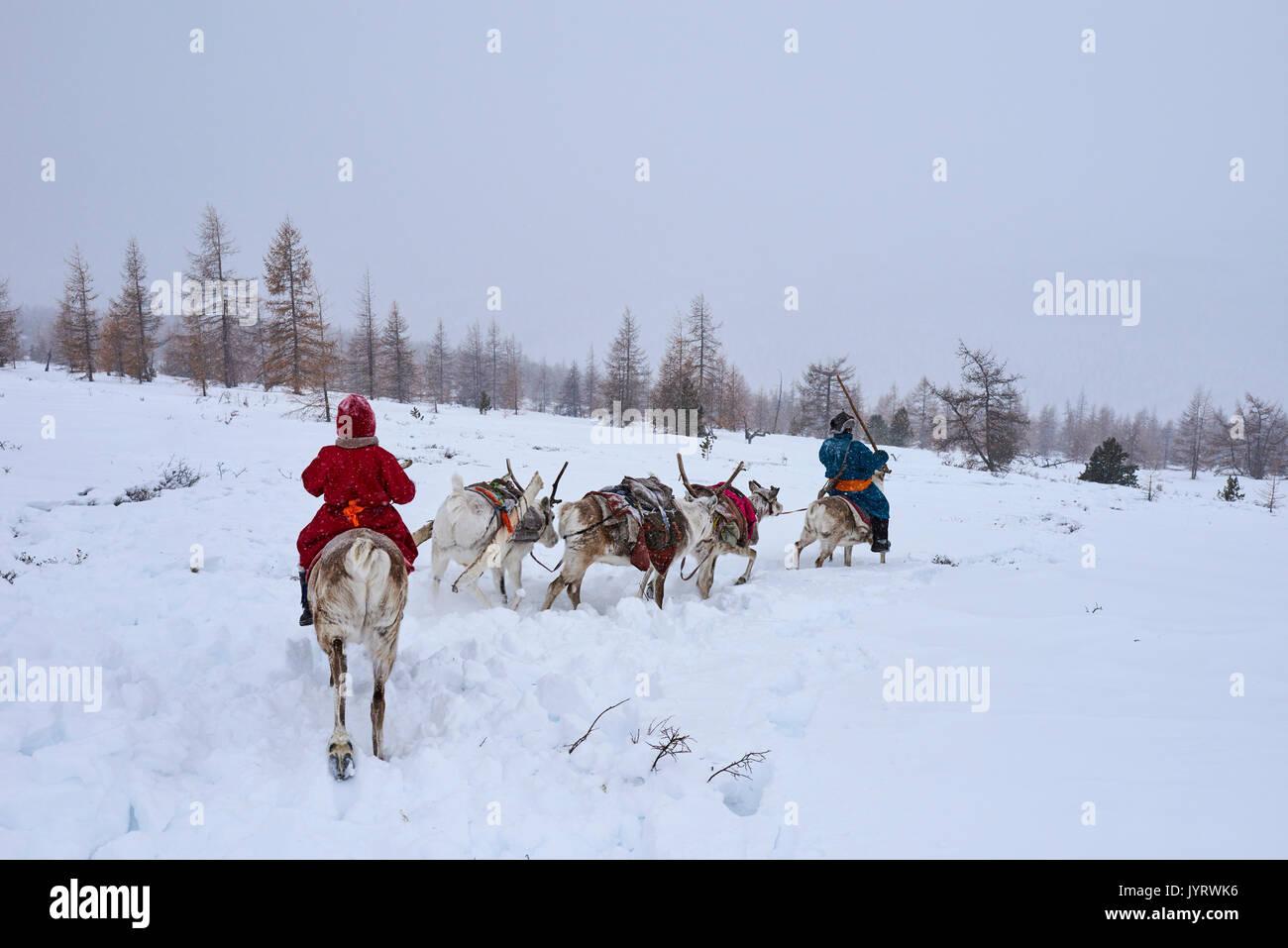 Mongolia, Khovsgol province, the Tsaatan, reindeer herder, winter migration, transhumance - Stock Image