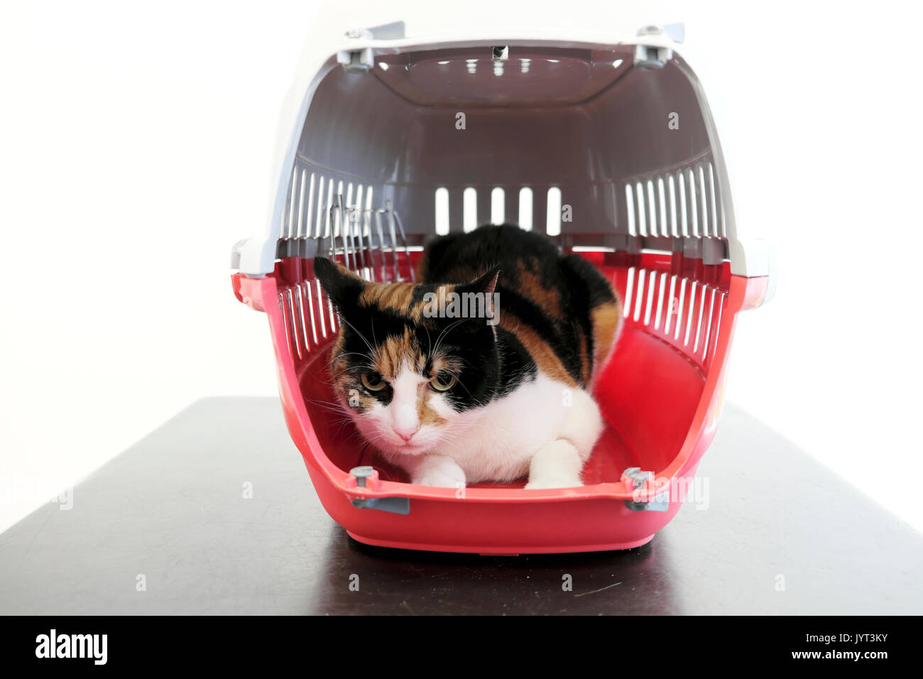 Cat with a wounded leg sitting in a red cat basket on a table waiting to be treated at a veterinary surgery in London UK  KATHY DEWITT - Stock Image