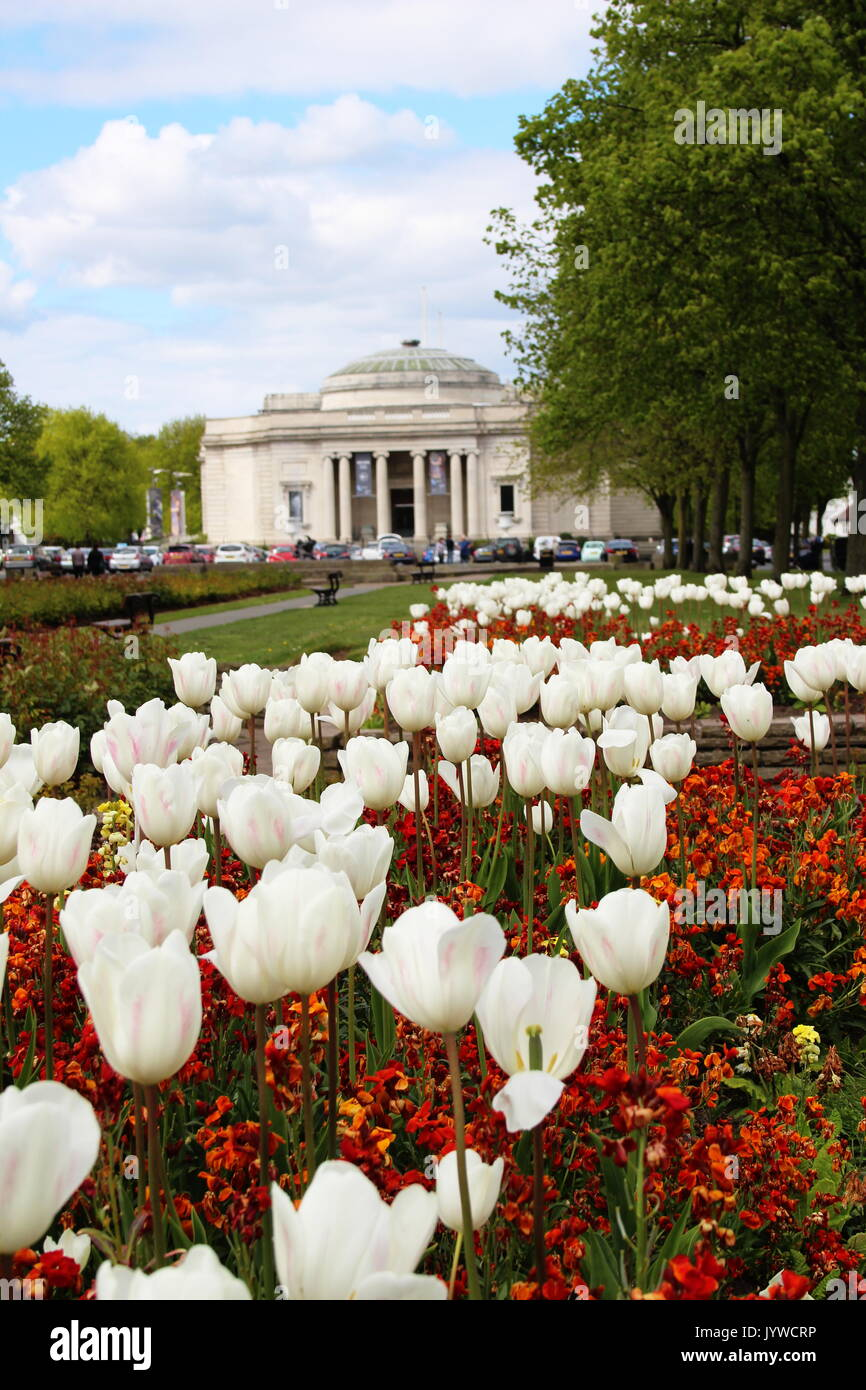 Tulips in bloom outside the Lady Lever Art Gallery, Port Sunlight Village, Wirral - Stock Image