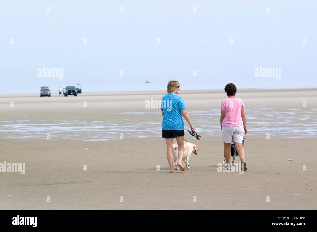 Walking the dogs on Cold Storage Beach - Dennis MA - Cape Cod & Walking the dogs on Cold Storage Beach - Dennis MA - Cape Cod Stock ...