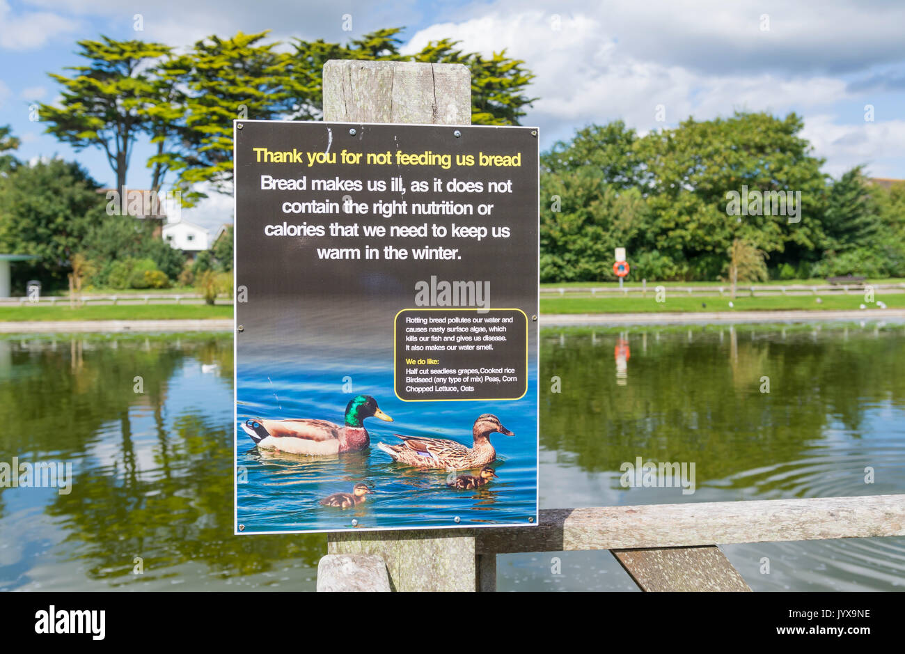Sign at a lake asking people not to feed bread to ducks, as it makes them ill In Mewsbrook Park, Littlehampton, West Sussex, England, UK. - Stock Image
