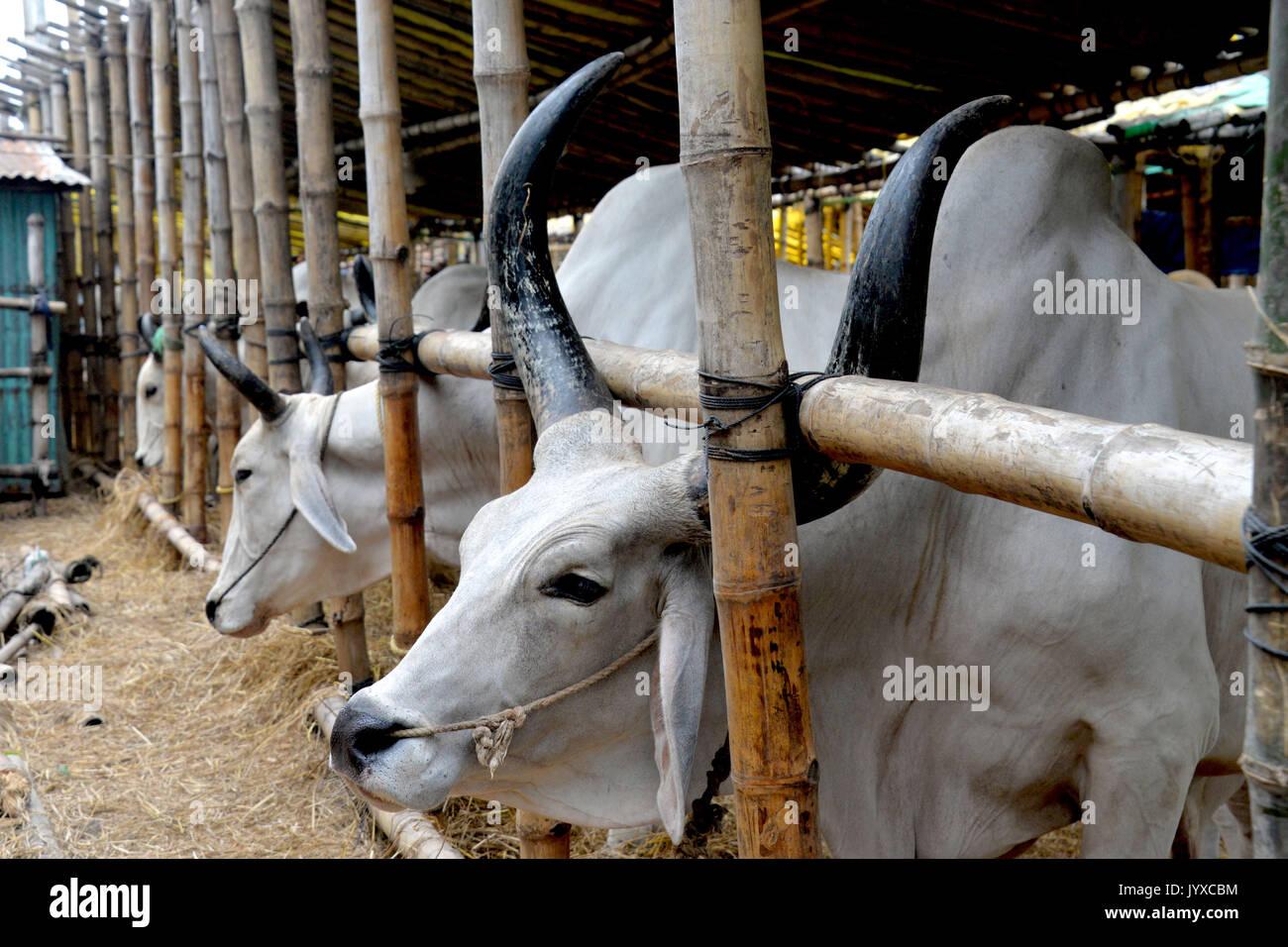 Eid Ul Azha Stock Photos & Eid Ul Azha Stock Images - Alamy