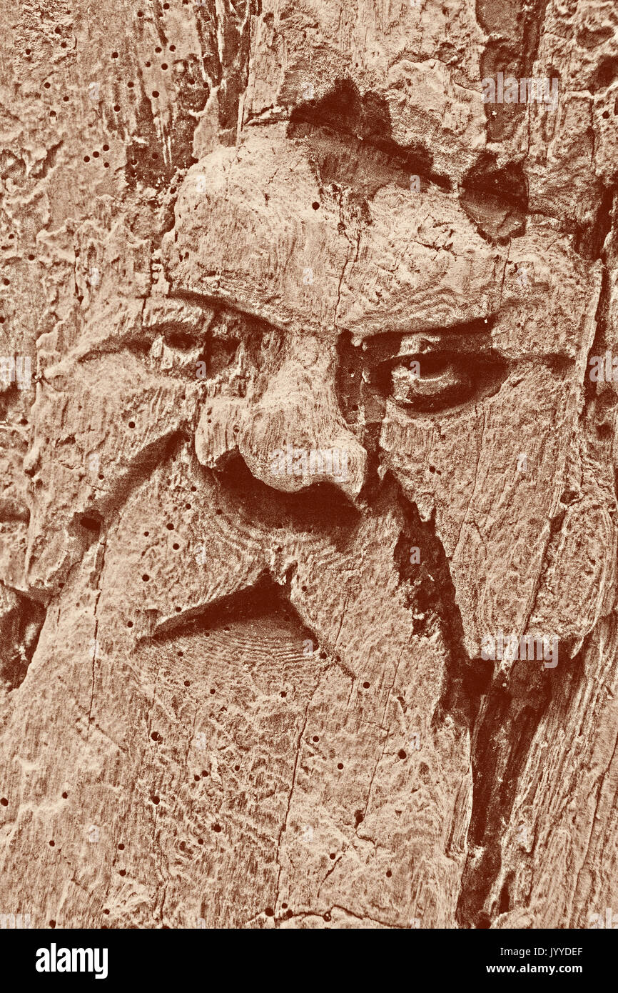 Carved Wooden Face of an Old Mystic Man in Tehidy Country Park, (NIK enhanced) - Stock Image
