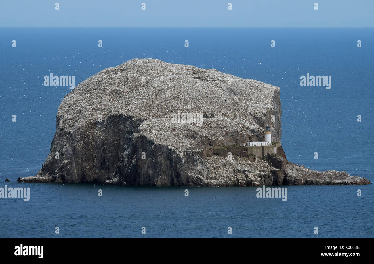 The Bass Rock, North Berwick East Lothian home to the largest colony of Northern Gannets in the world and is a site of special scientific interest. - Stock Image