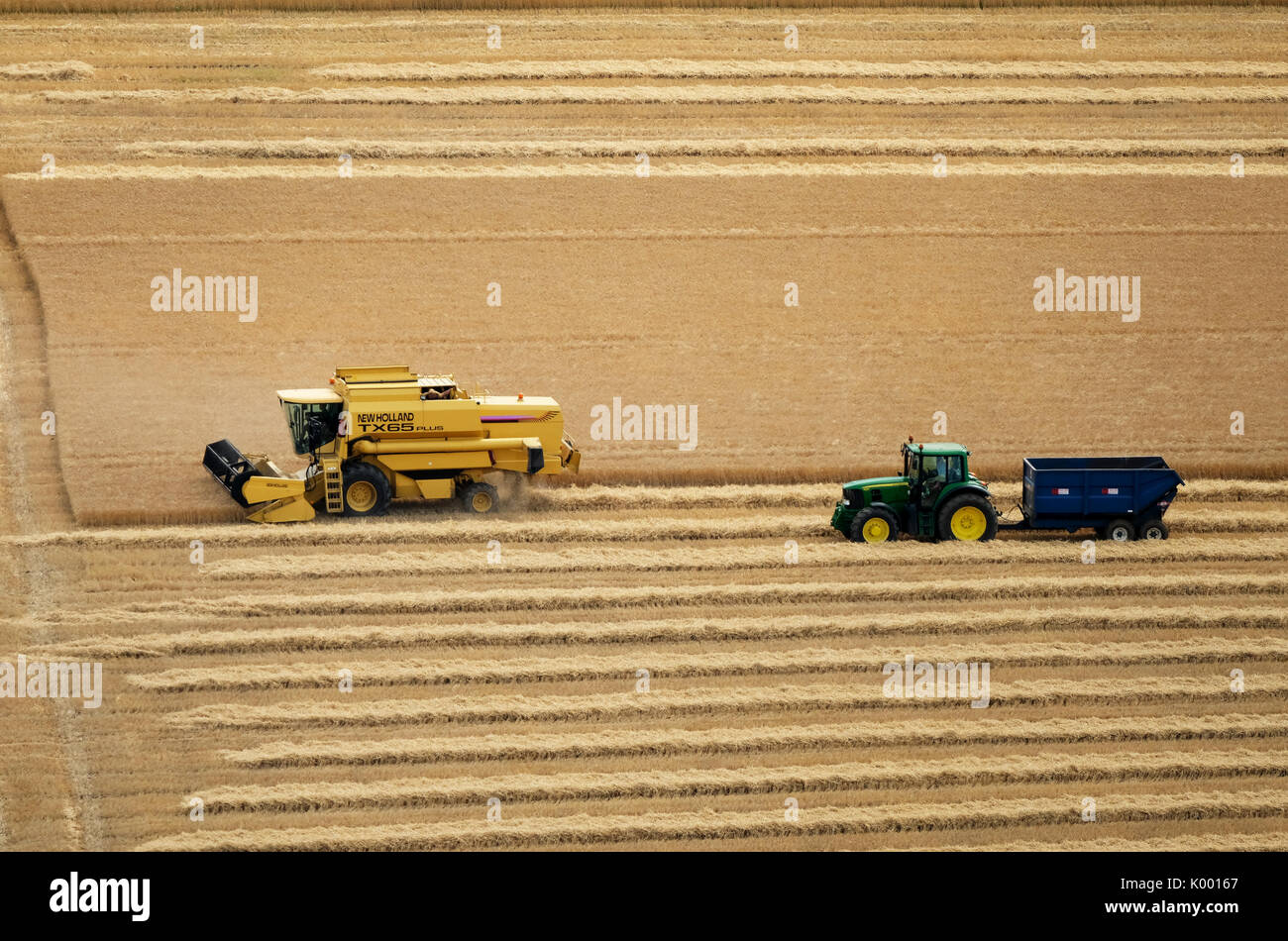 A combine harvester working in a wheat field near North Berwick East Lothian. Stock Photo