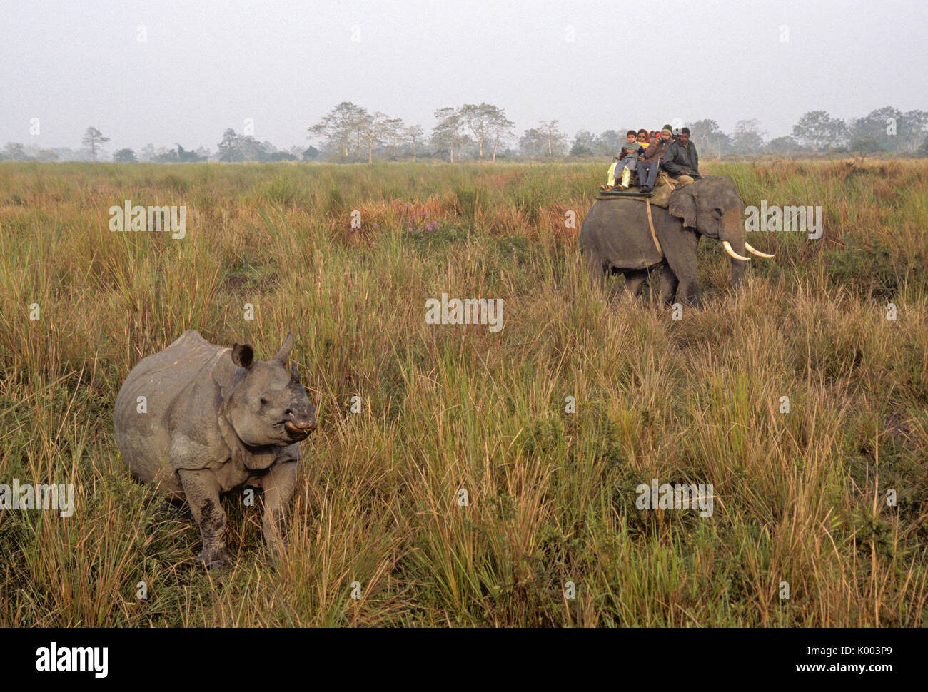 Indian tourists on elephant watching Asian one-horned rhinoceros, Kaziranga National Park, Assam, India - Stock Image