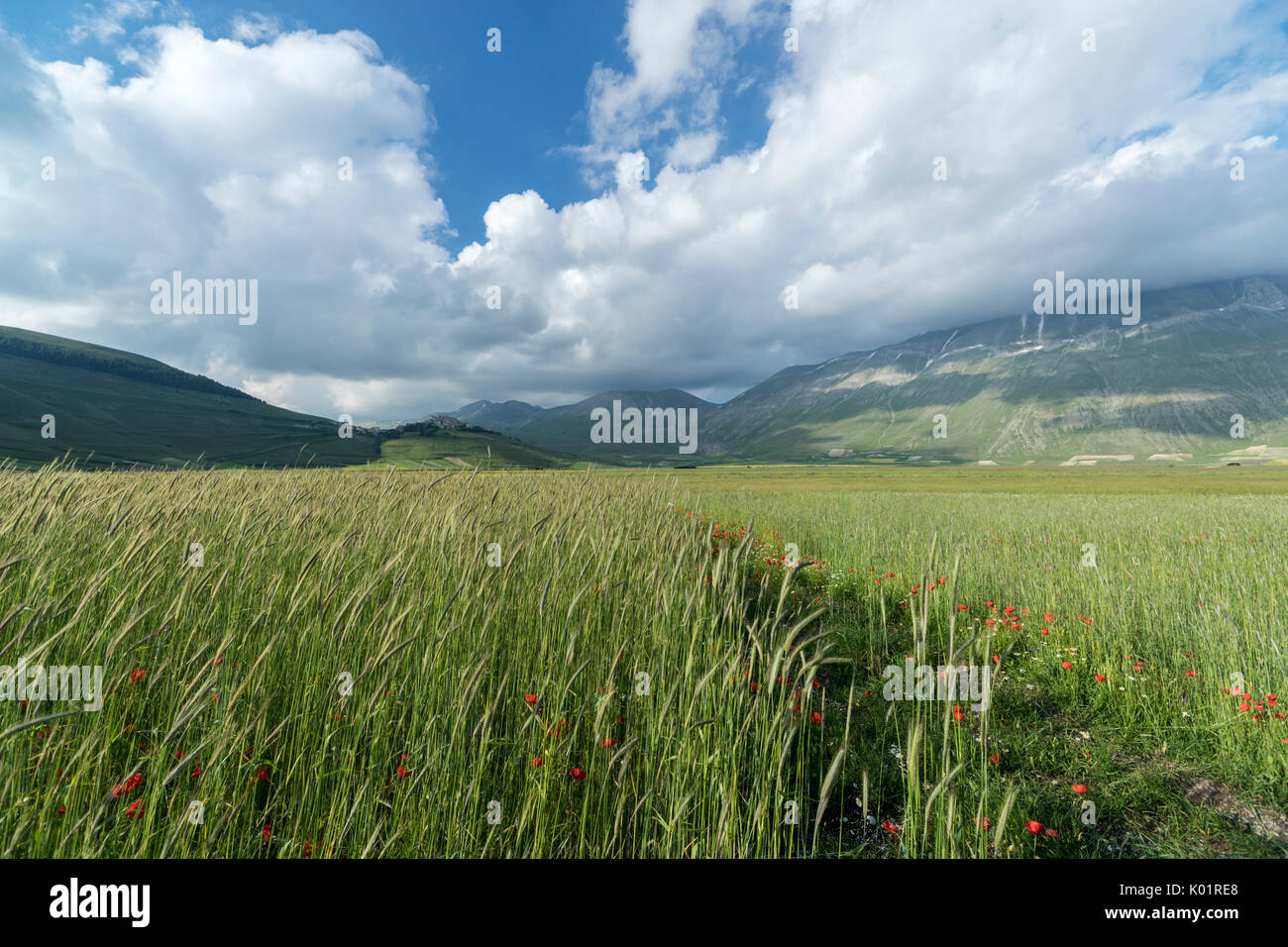 Green fields of ears of corn frame the medieval village Castelluccio di Norcia Province of Perugia Umbria Italy Europe - Stock Image