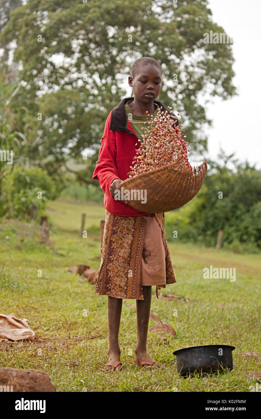 Girl winnowing beans, Kenya Stock Photo