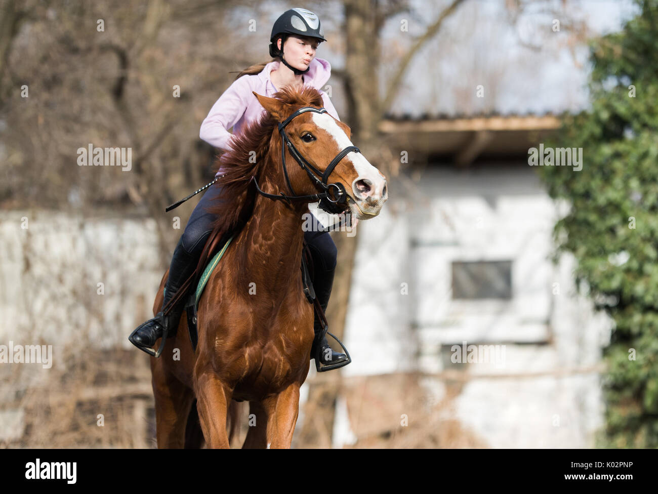 Young pretty girl riding a horse - Stock Image
