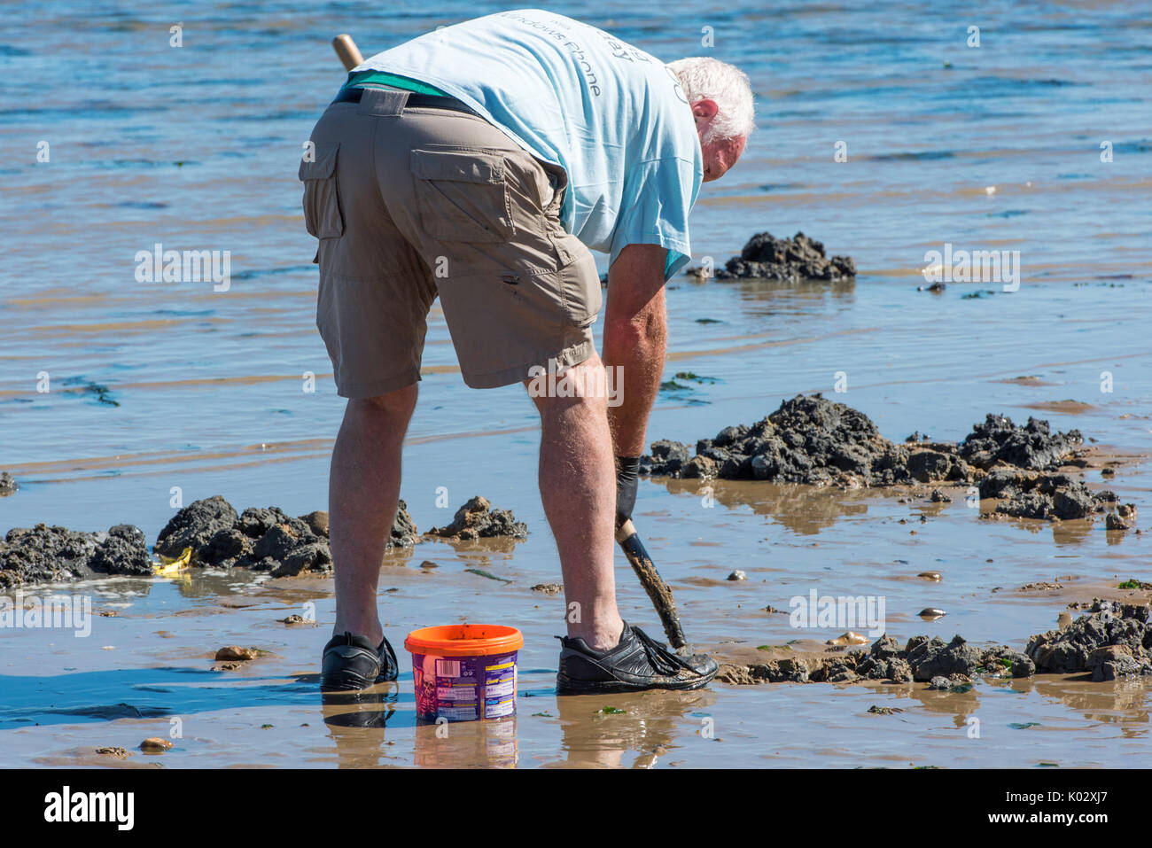 Fisherman digging for lugworms in Herne Bay, Kent. - Stock Image