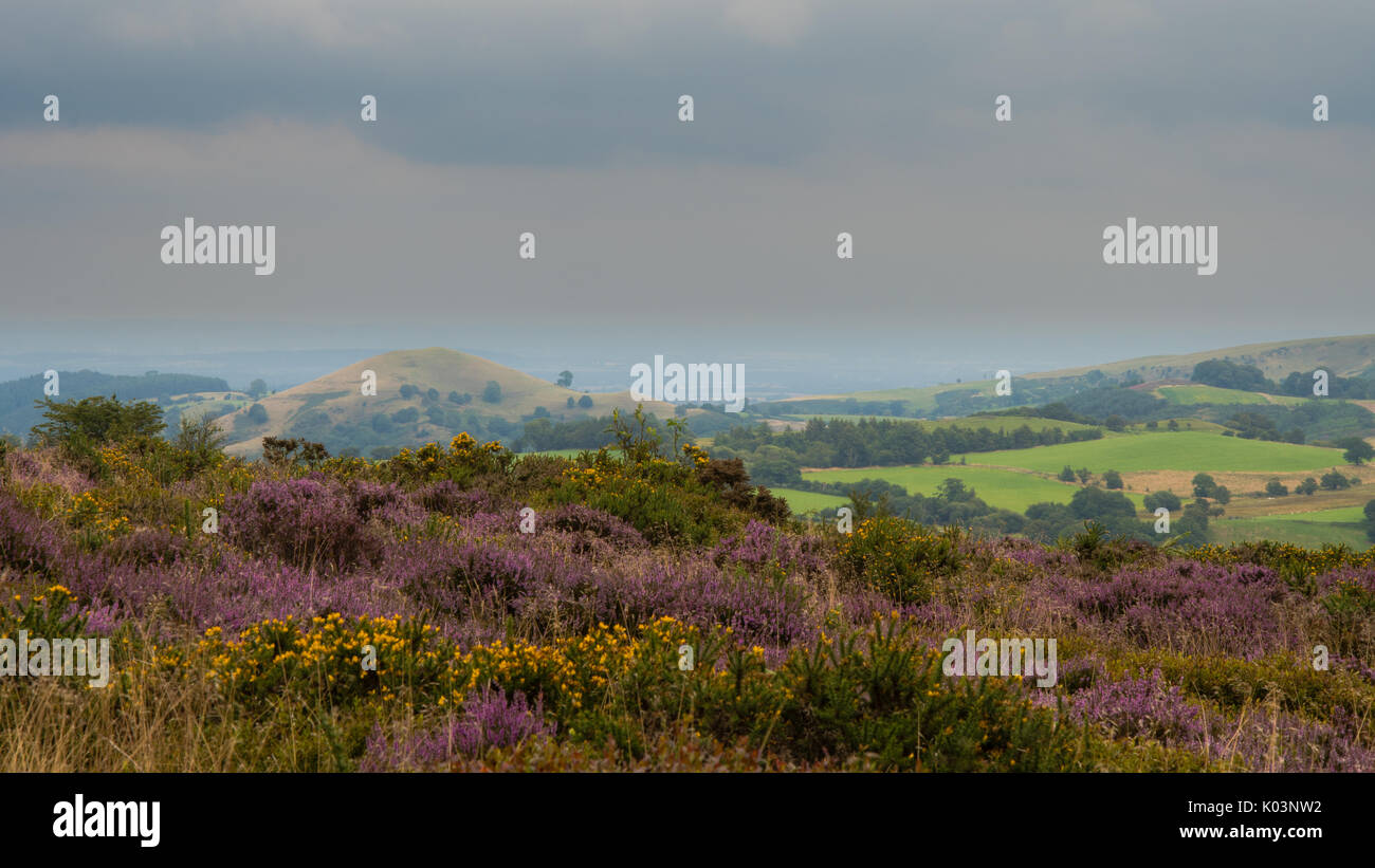 View from the Stiperstones Area of Natural Beauty. Looking to the east of National Nature Reserve in Shropshire, England, UK - Stock Image