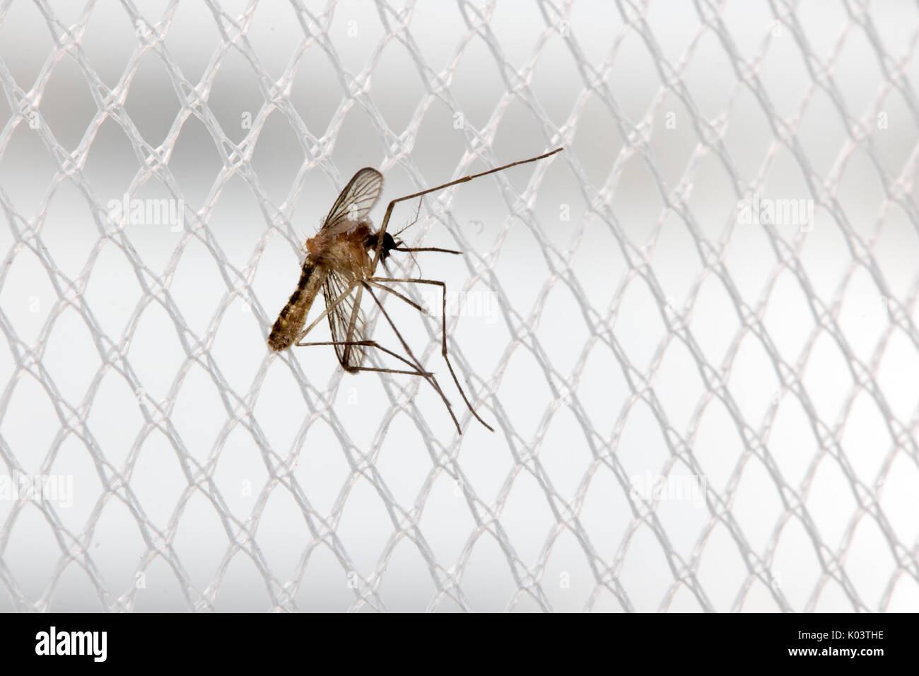 Window Mosquito Stock Photos Window Mosquito Stock Images Alamy