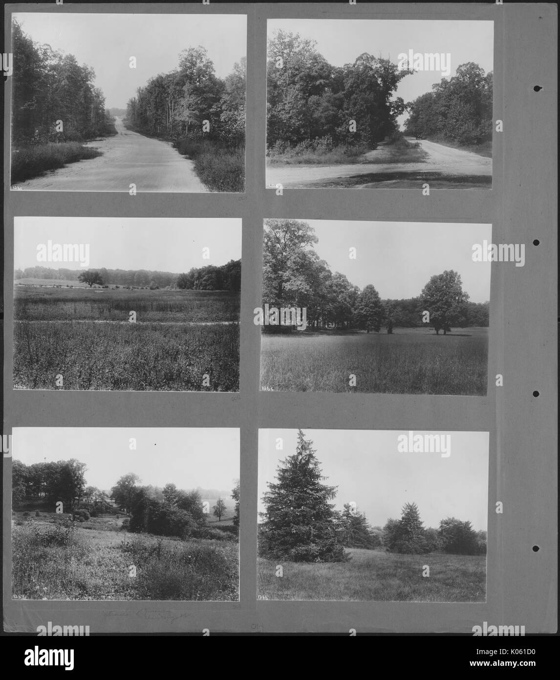 Six small photos of unoccupied land of Roland Park and Guilford, the land is composed of untrimmed grass and trees, United States, 1910. This image is from a series documenting the construction and sale of homes in the Roland Park/Guilford neighborhood of Baltimore, a streetcar suburb and one of the first planned communities in the United States. - Stock Image