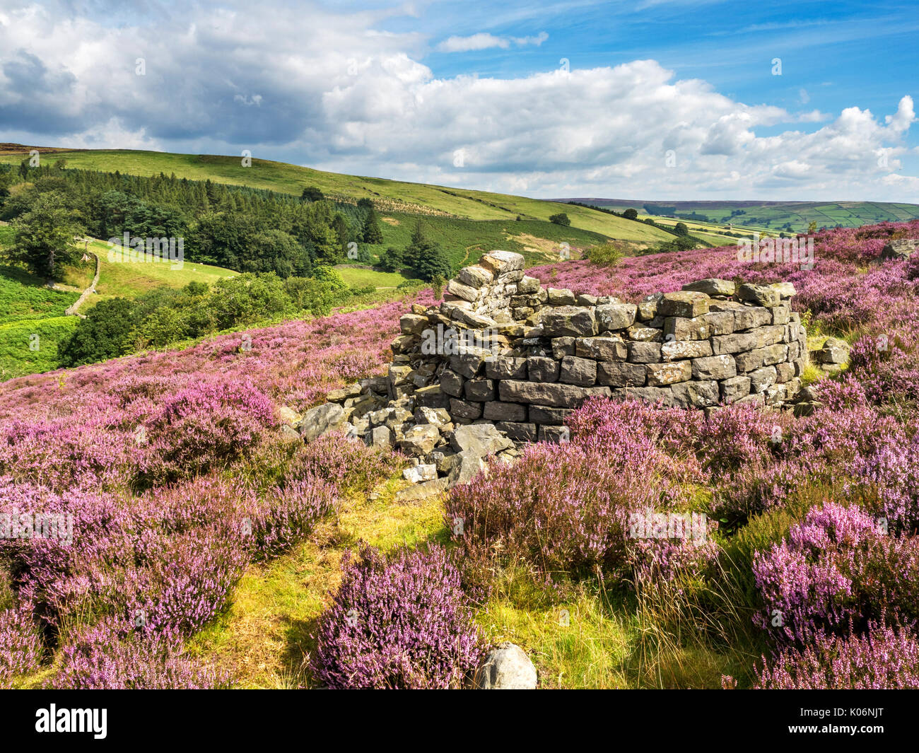 Ruins of a Beehive Condenserat Prosperous Lead Smelting Mill near Pateley Bridge Nidderdale AONB Yorkshire England - Stock Image