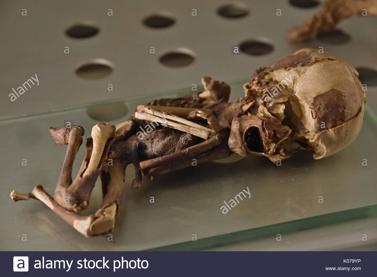 Mummy of 5-6 months old fetus displayed at Museum of Nature and Man (Museo de la Naturaleza y el Hombre) Santa Cruz de Tenerife Canary Islands - Stock Image