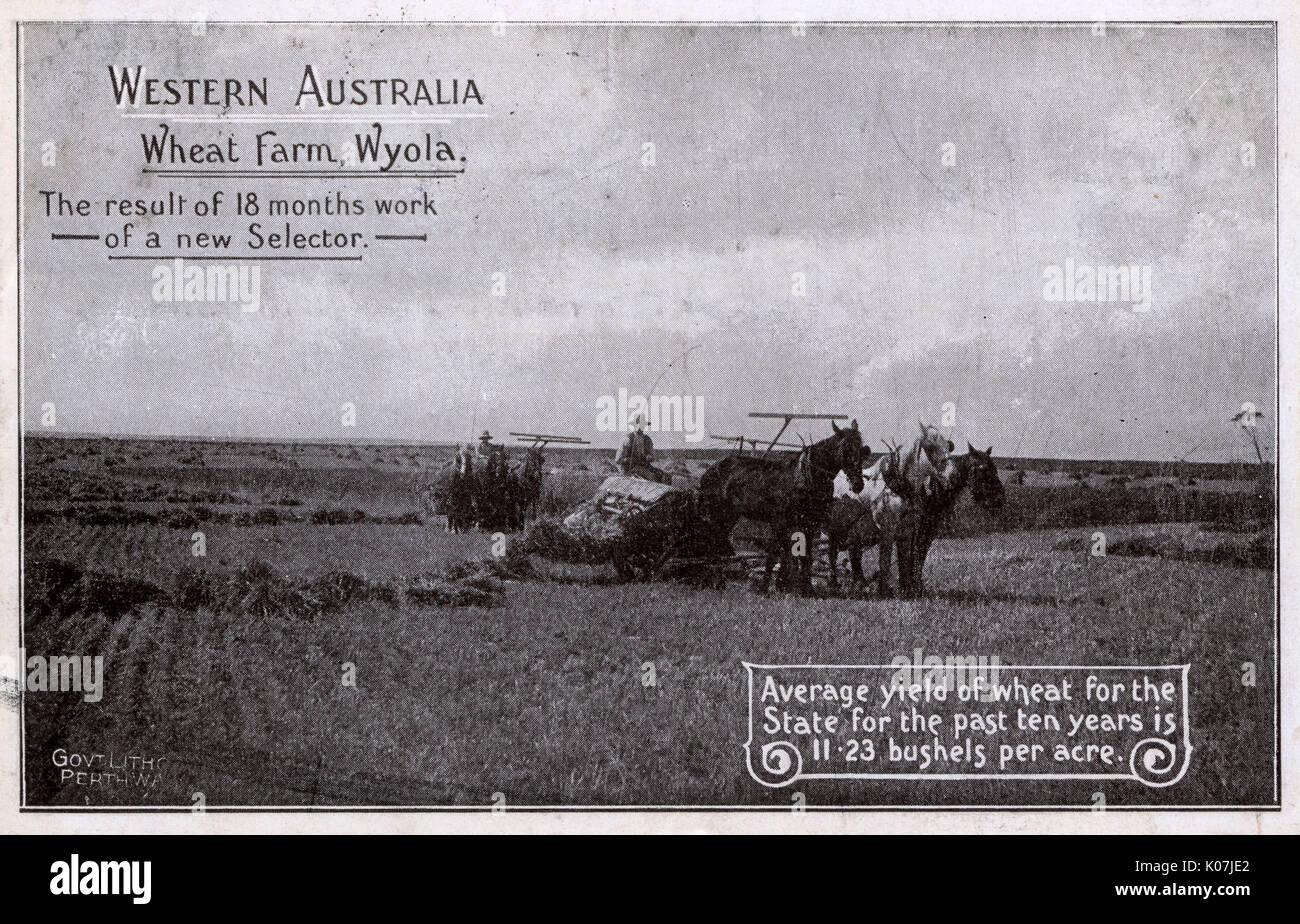 Harvest dating australia