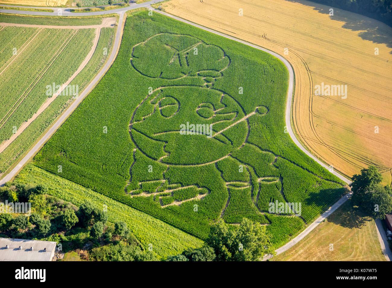Corn maze, global warming, Selm, Ruhr area, North Rhine-Westphalia, Germany Stock Photo