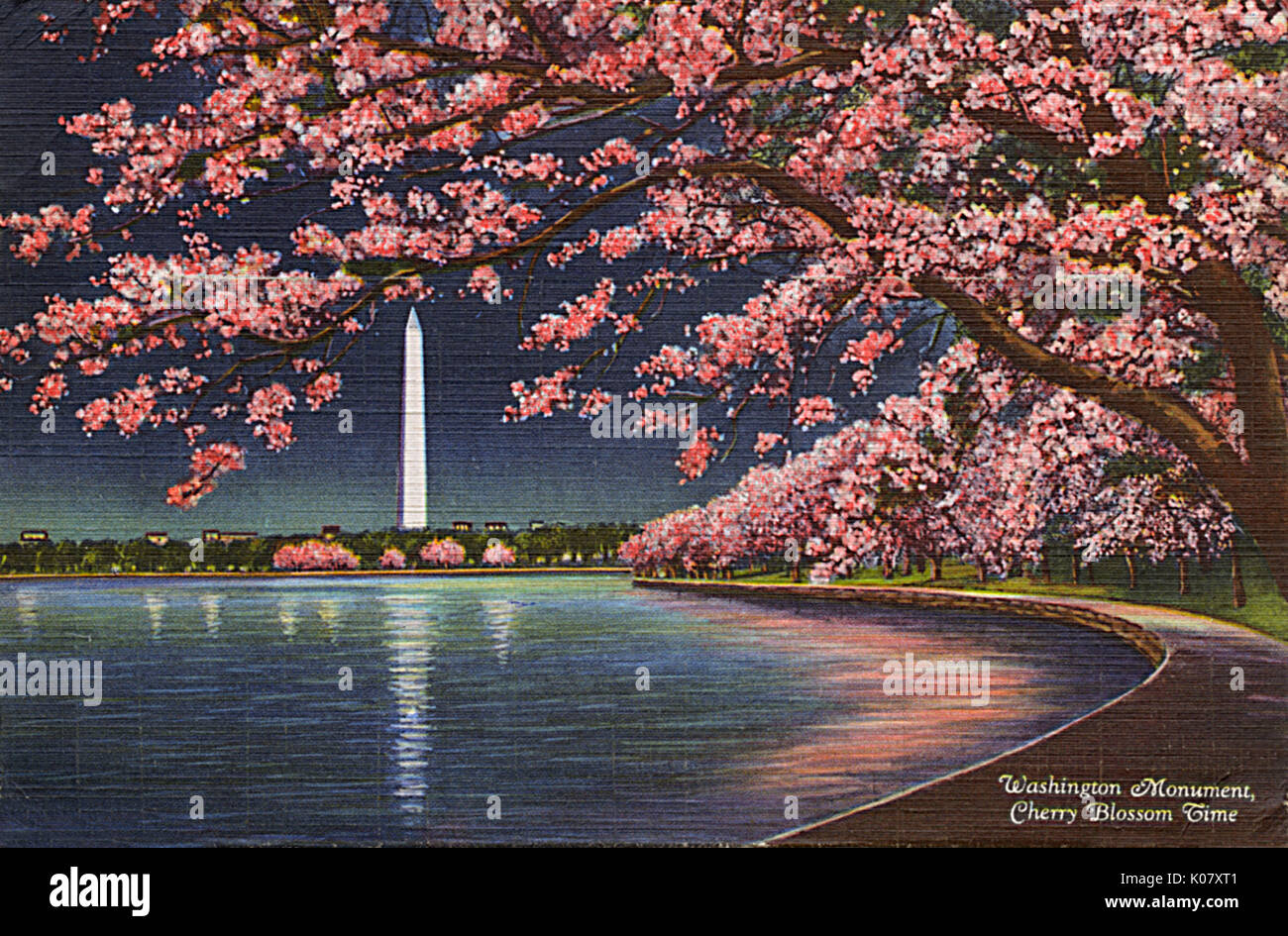 Cherry Blossoms At Night Dc