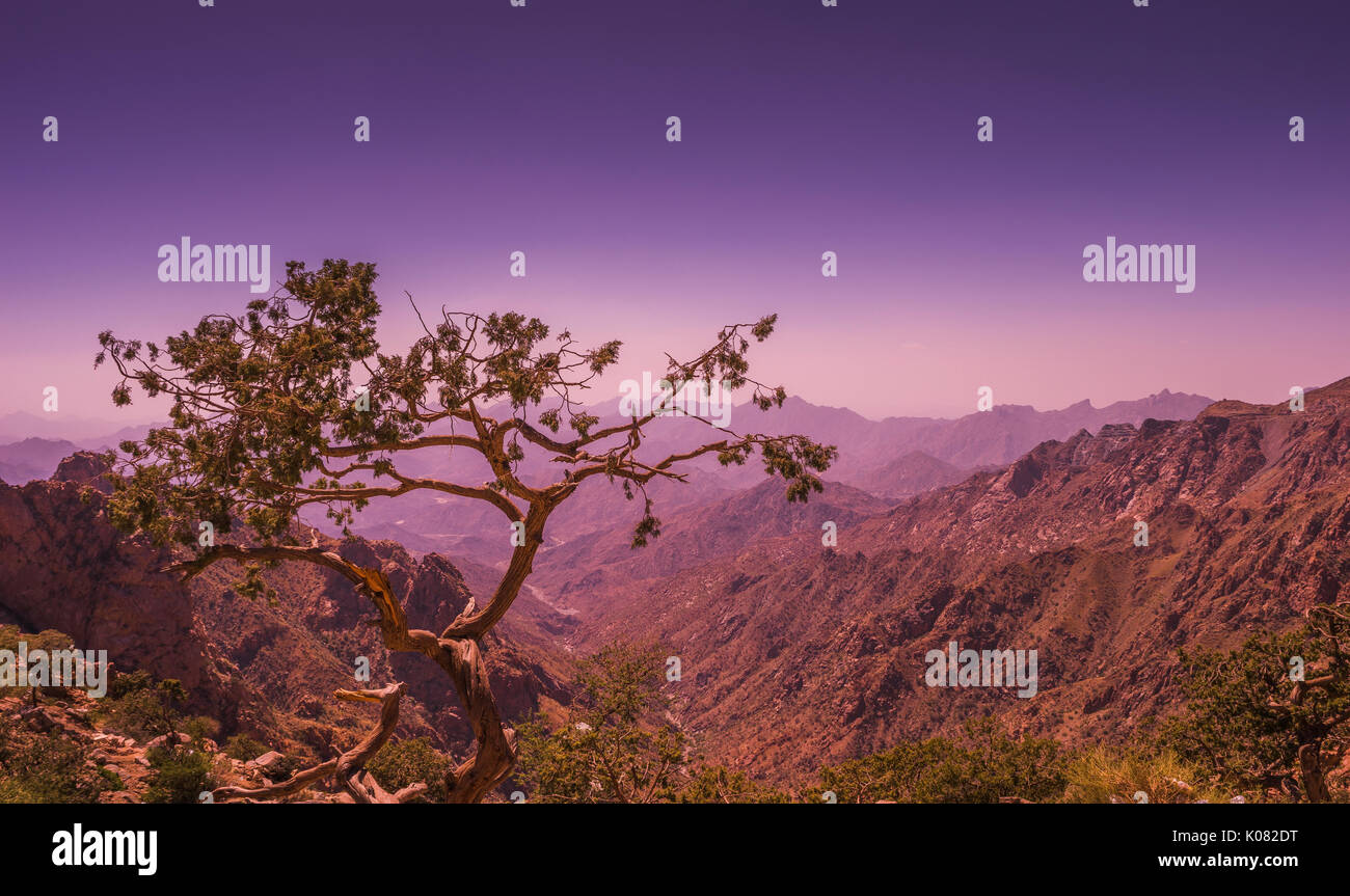 a tree looking at a valley in Taif Mountains - Stock Image