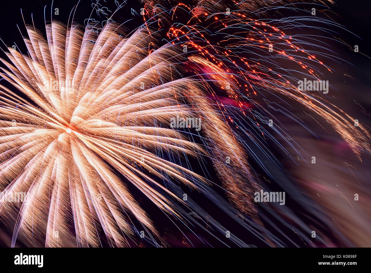 Colorful fireworks, as pink peony and sparks. Colored firework holiday background - Stock Image