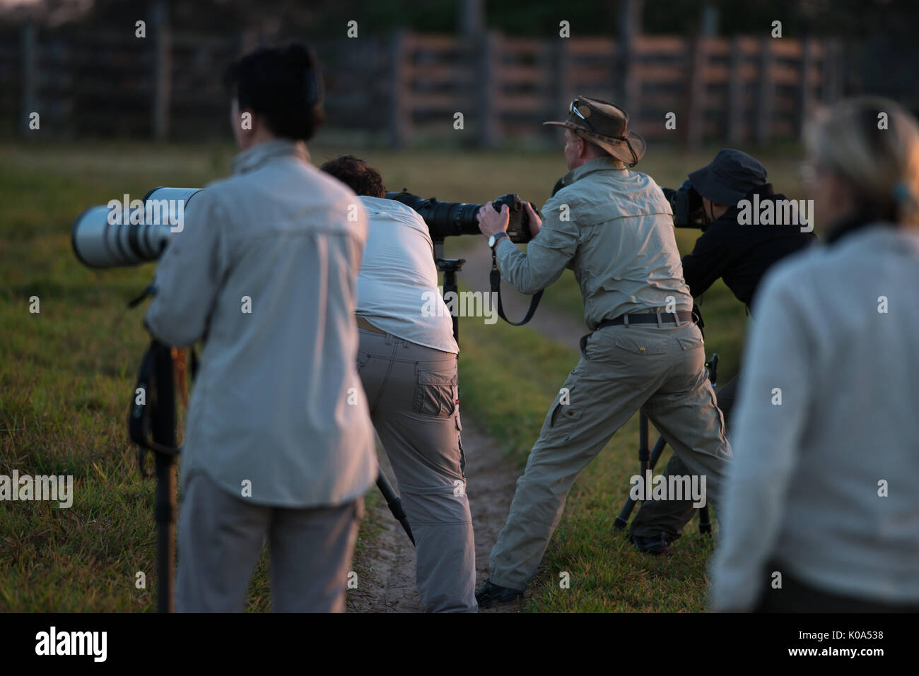 Photographers on a tour in the Pantanal of Brazil - Stock Image