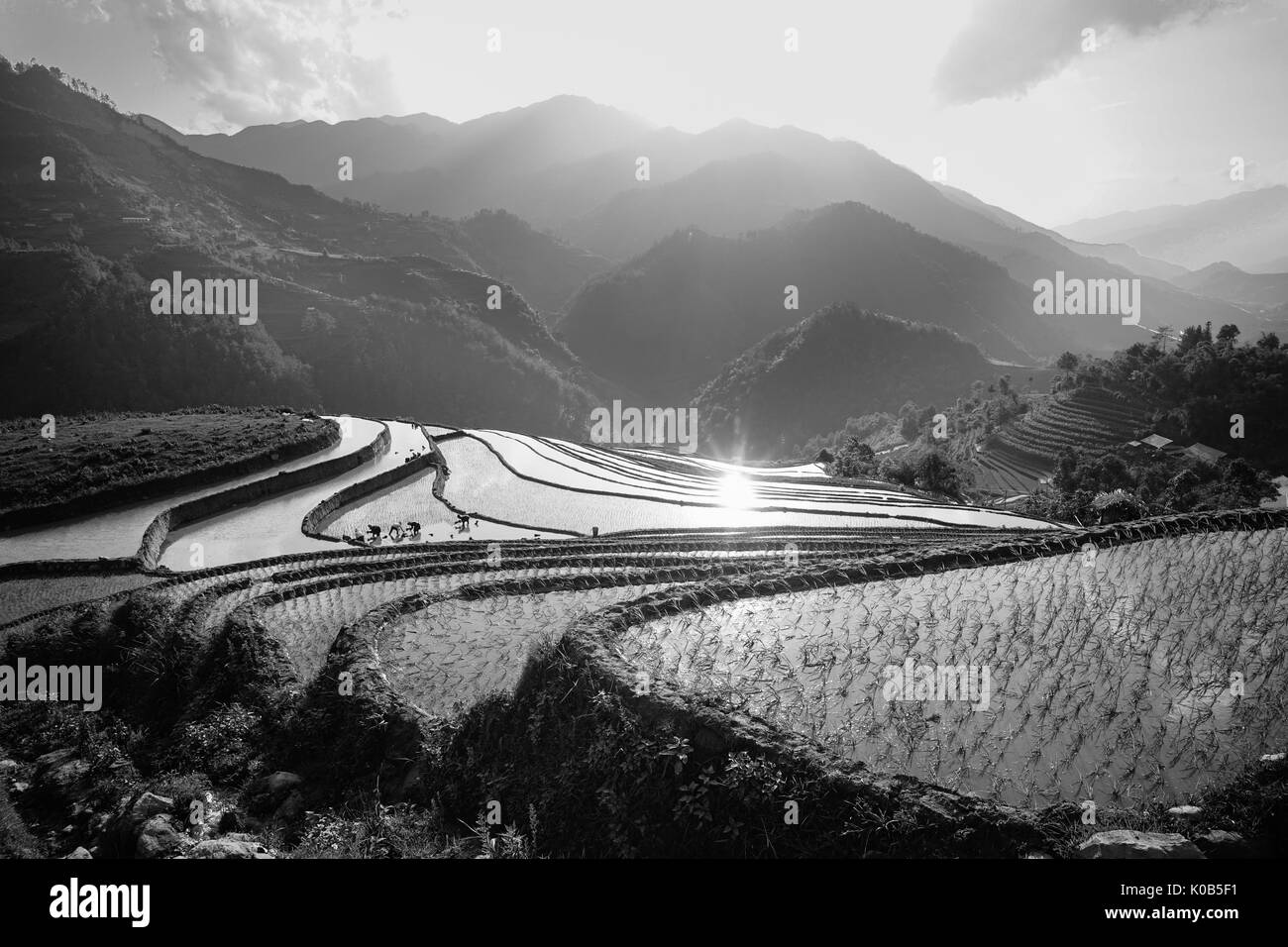 Terraced rice field at sunny day in Lao Cai, Vietnam. Lao Cai is a province of the mountainous northwest region of Vietnam, sharing 203 km of border w - Stock Image