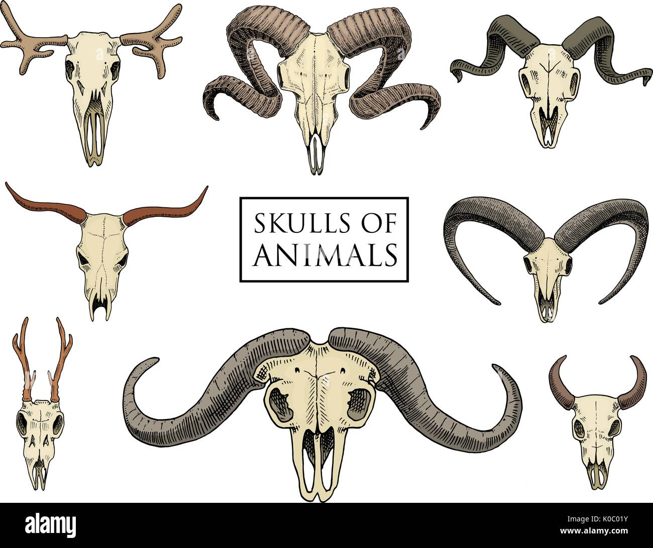 Sheep Elk Stock Photos & Sheep Elk Stock Images - Alamy
