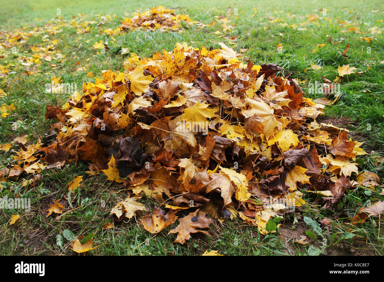 Pile of fallen leaves in autumn park. Fall background - Stock Image
