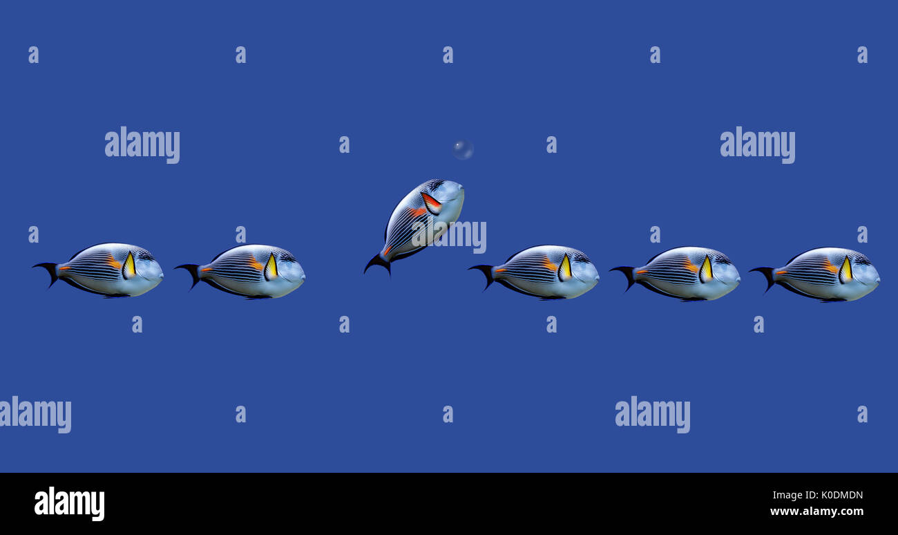 Illustration of tropical fishes on concept : decide by yourself what you want to do. - Stock Image