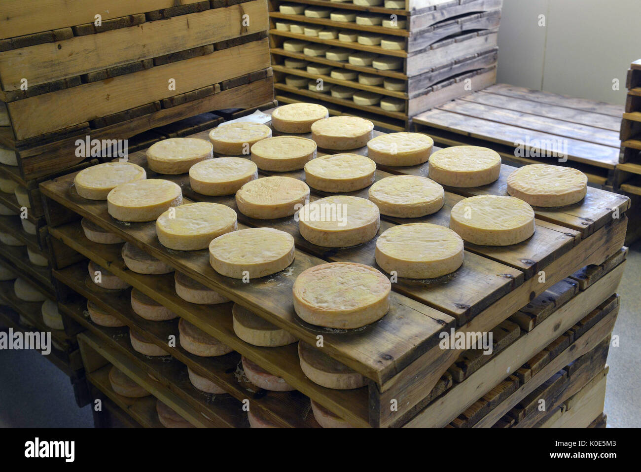 2014/02/02. Munster cheese maturing cellar, AOC (with a guarantee of origin) soft cheese made mainly from milk from the Vosges, in the Haut-Rhin - Stock Image