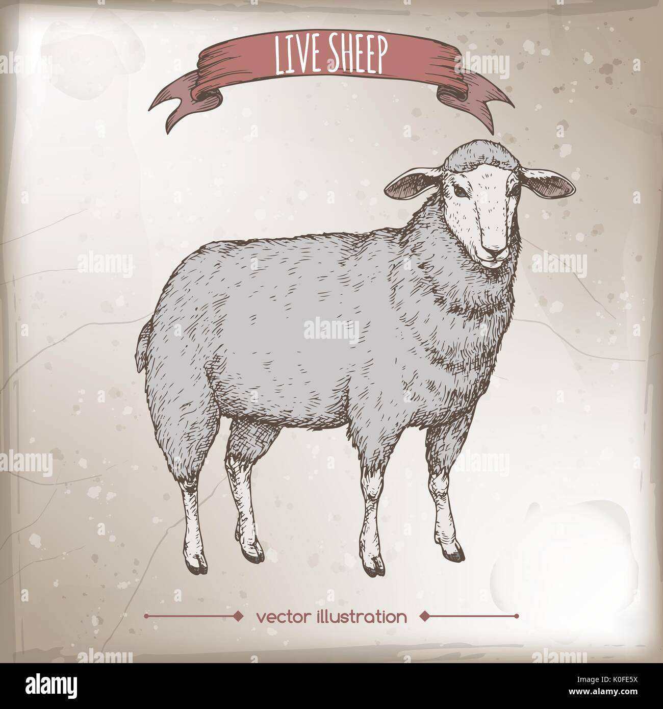 Vintage color label with live sheep. - Stock Vector
