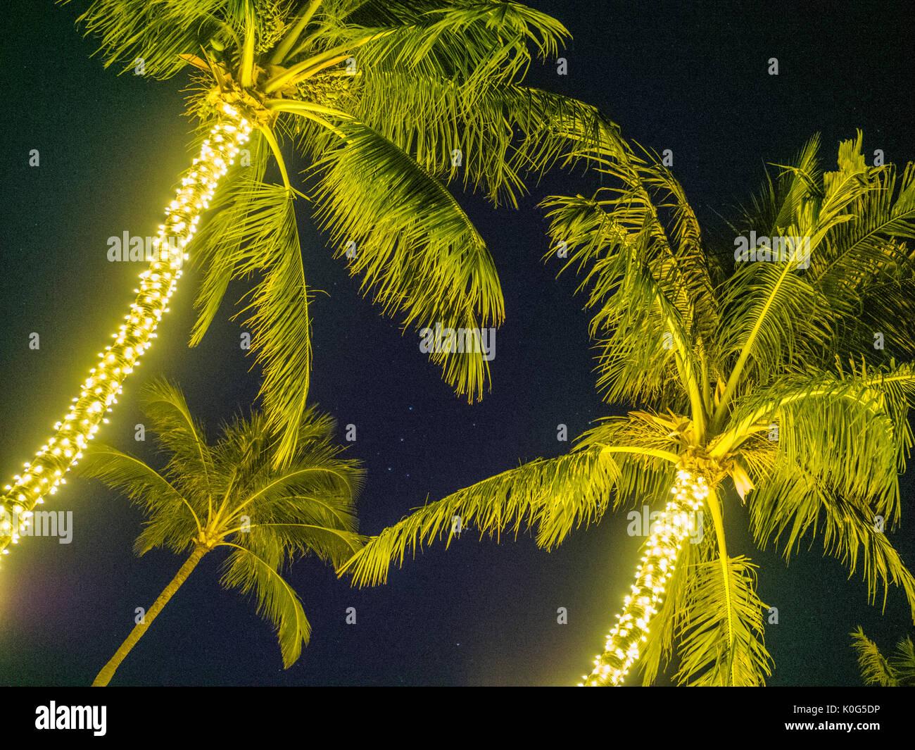 Resort palm trees on Maui Hawaii Stock Photo