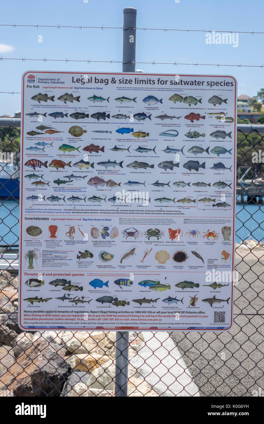 New South Wales Government Legal Bag And Size Limits For Saltwater Fish Species Poster On Display At Port Eden New South Wales Australia - Stock Image