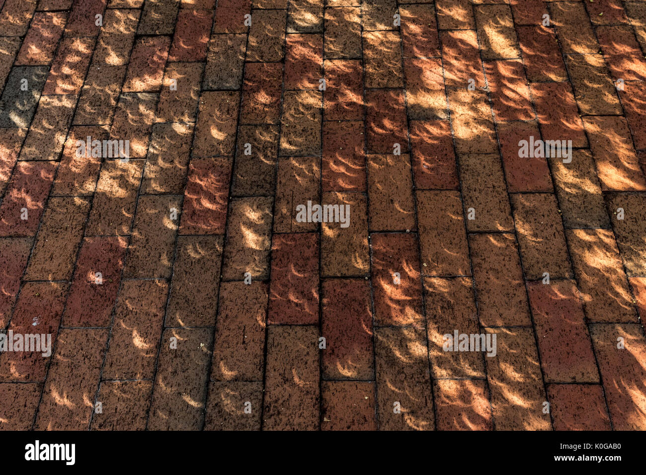 Crescent shaped images of partially eclipsed sun dapple ground below tree in Columbia, SC just after period of totality; solar eclipse of 21 Aug 2017 - Stock Image