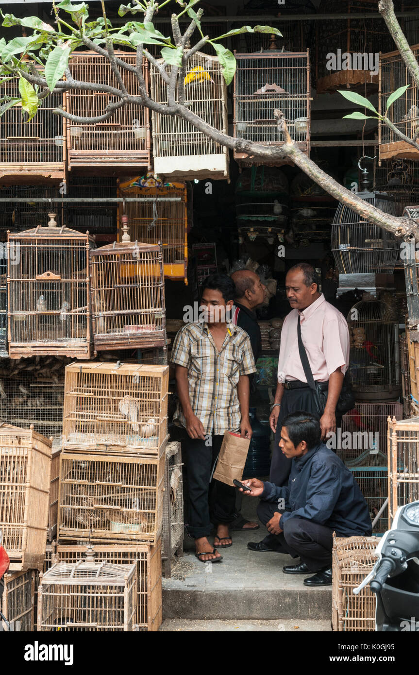 Customers admiring birds at the bird and animal market in Denpasar, Southern Bali, Indonesia. - Stock Image