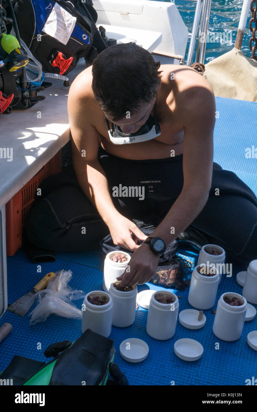 scientist organizing samples collected during dive on Ilha da Queimada Grande island, Brazil - Stock Image
