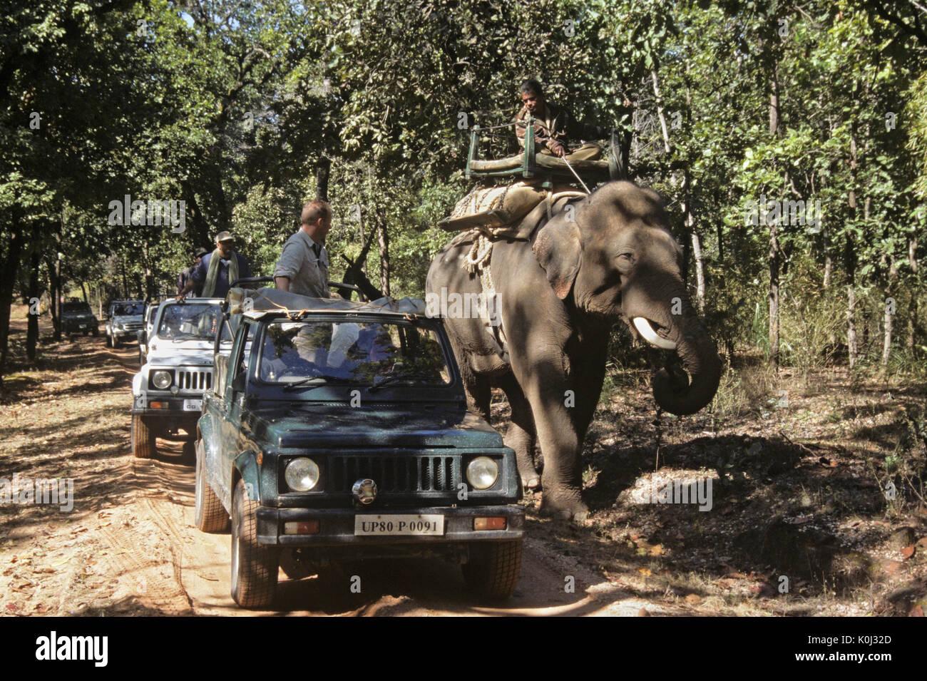 On safari in Bandhavgarh National Park, Madhya Pradesh, India - Stock Image