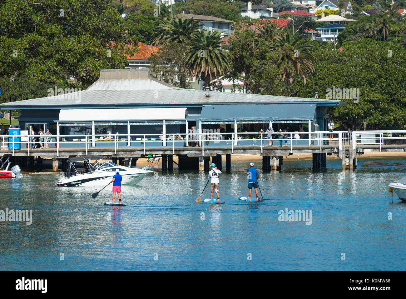 Stand up paddle boarding at Watsons harbour near the ferry stop, Sydney, New South Wales, Australia. - Stock Image