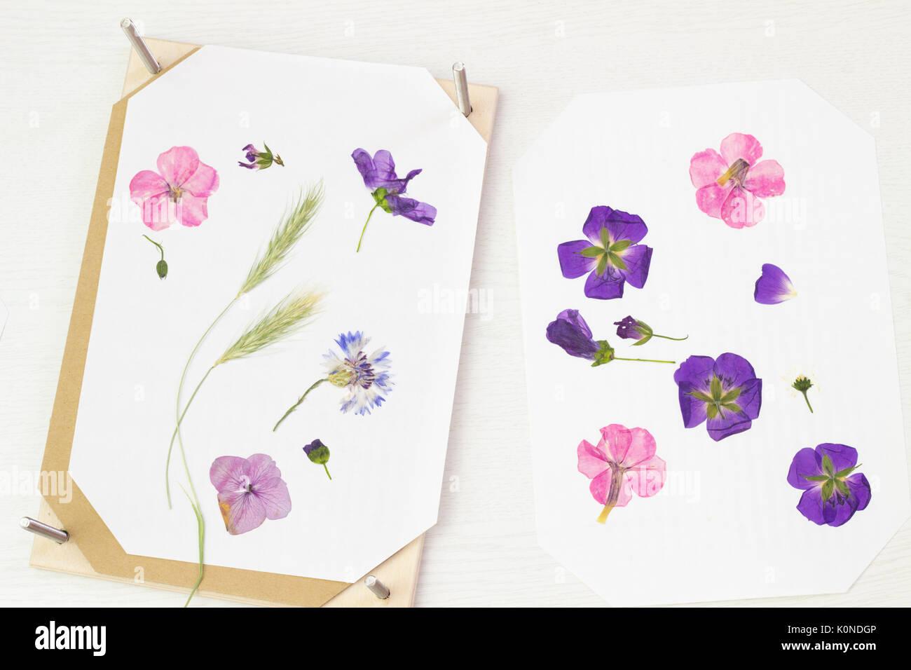 Pressing flowers stock photos pressing flowers stock images alamy pressing flowers stock image mightylinksfo