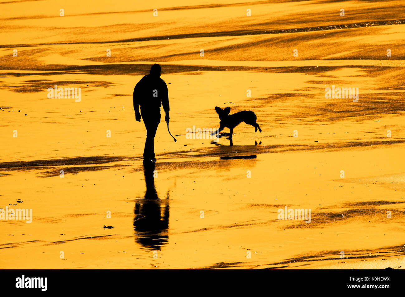 The silhouette of a man walking with his dog on a beach at sunset. Stock Photo