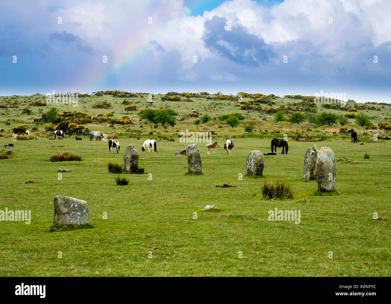 Megalithen, Steinkreis The Hurlers aus Bronzezeit, Ponies, Bodmin Moor, Cornwall, England, Großbritannien - Stock Image